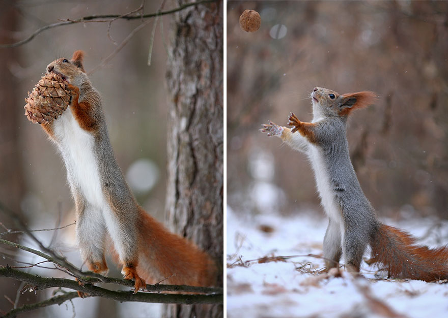 squirrel-photography-russia-vadim-trunov-15