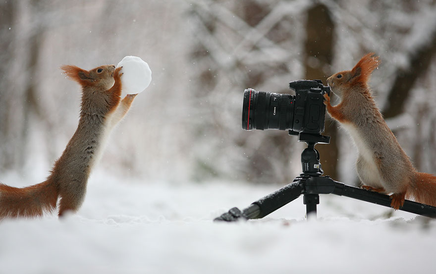 squirrel-photography-russia-vadim-trunov-7