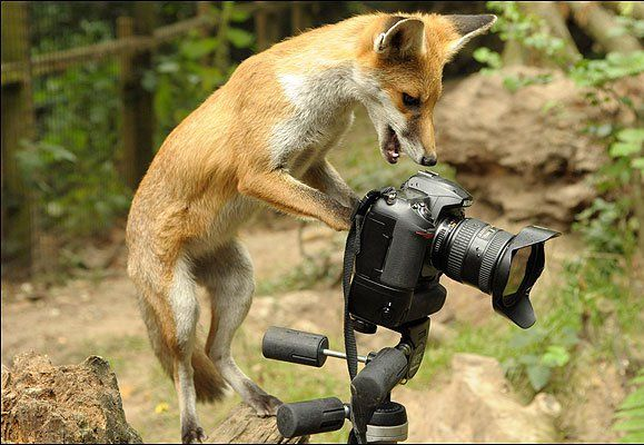20 Funny Animals Appear To Be Taking Photos With Cameras