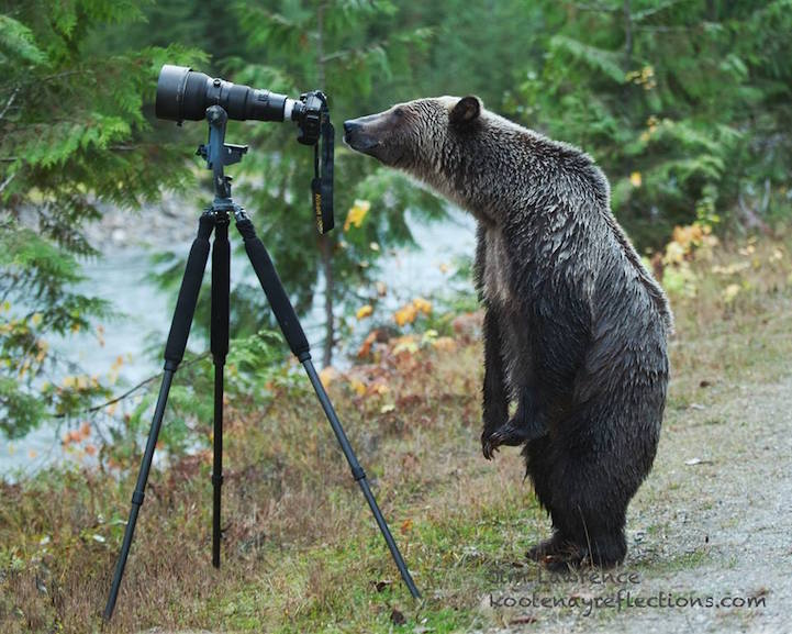 bearphotobyjimlawrence