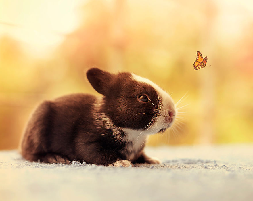 adorable-pictures-baby-bunnies 11