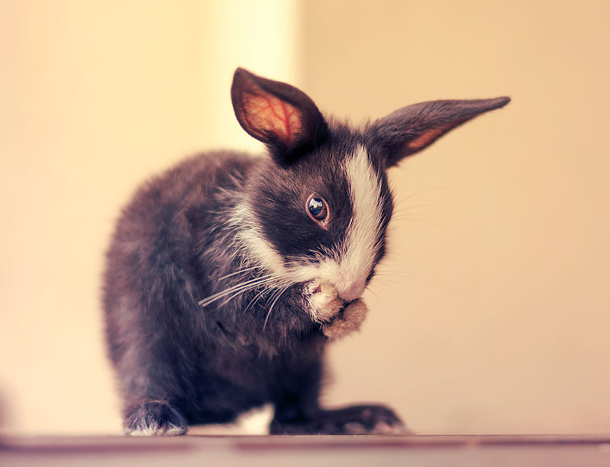 adorable-pictures-baby-bunnies 12