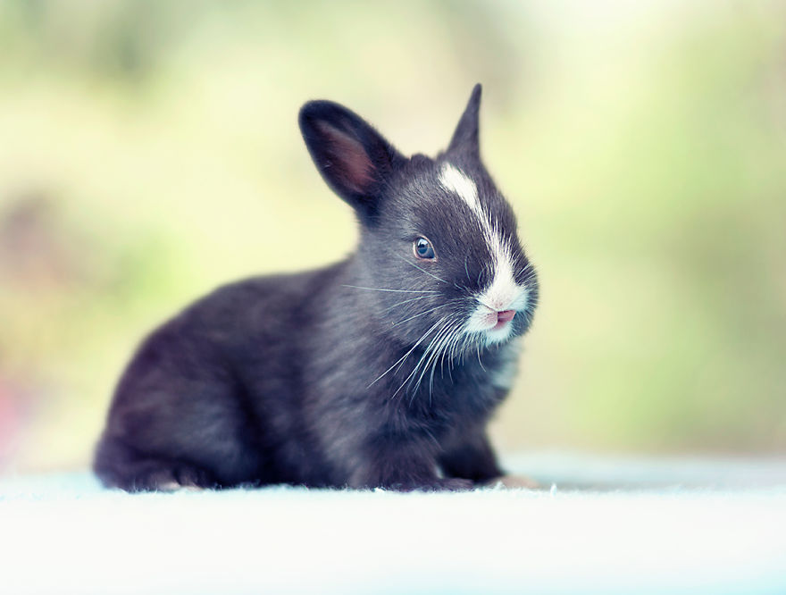 adorable-pictures-baby-bunnies 18