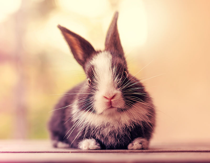 adorable-pictures-baby-bunnies 20