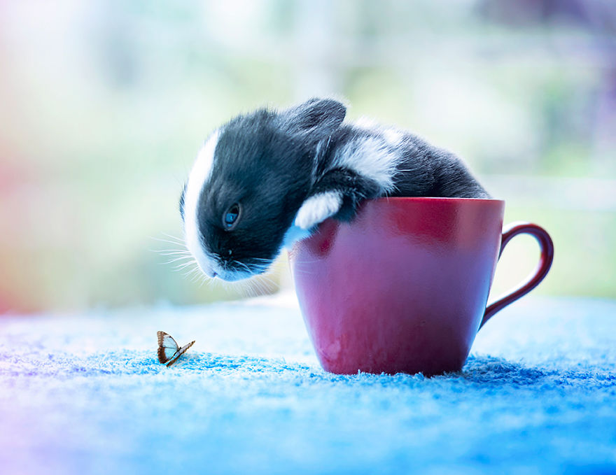 adorable-pictures-baby-bunnies 8