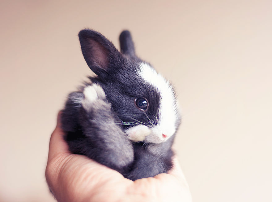 adorable-pictures-baby-bunnies 9