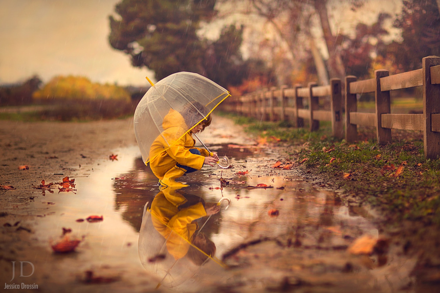Wet Leaves by Jessica Drossin