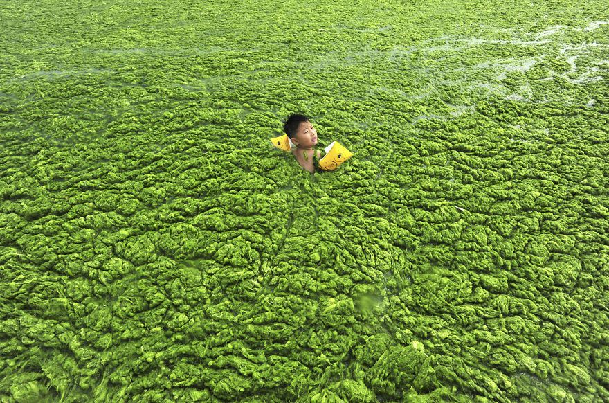 Boy swims in water choked with algal bloom, Qingdao, Shandong