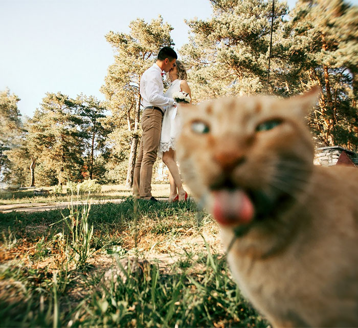 Best Wedding Photobombs21