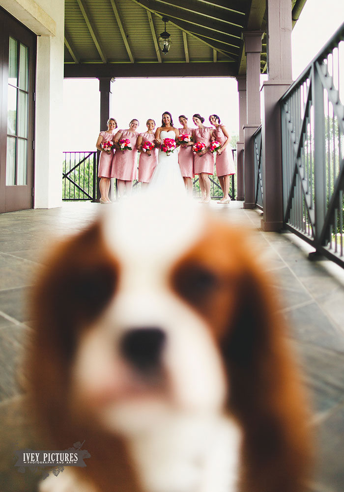 Best Wedding Photobombs25