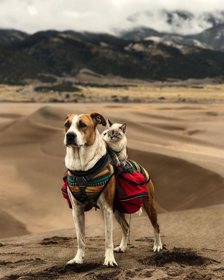 Cat And Dog Love Travelling Together