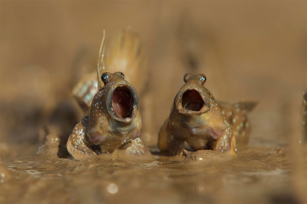33 Stunning Finalists of the Comedy Wildlife Photography Awards 2017