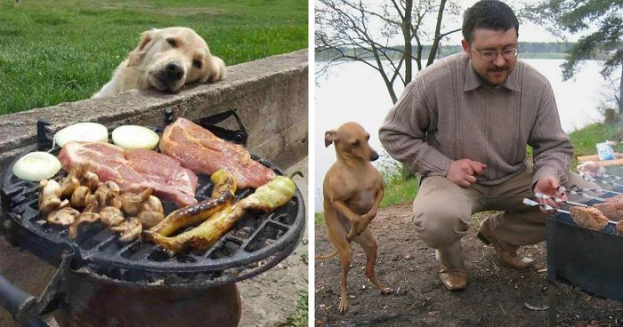 Funny Photos Of Hungry Dogs Begging Food 10