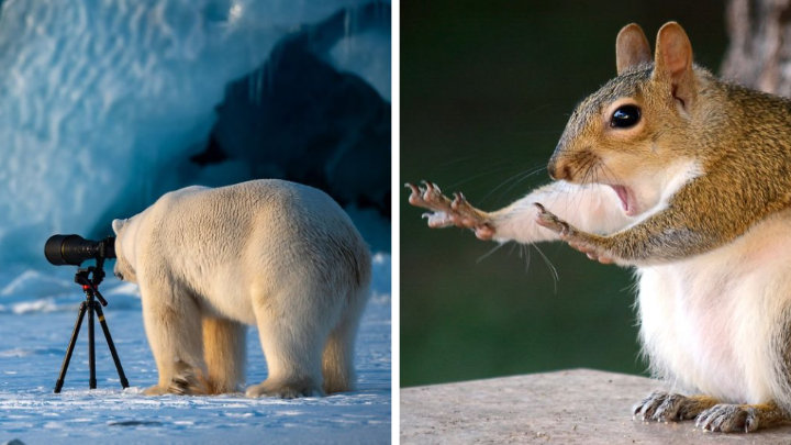 41 Finalists of the Comedy Wildlife Photo Awards 2018, And They're Hilarious