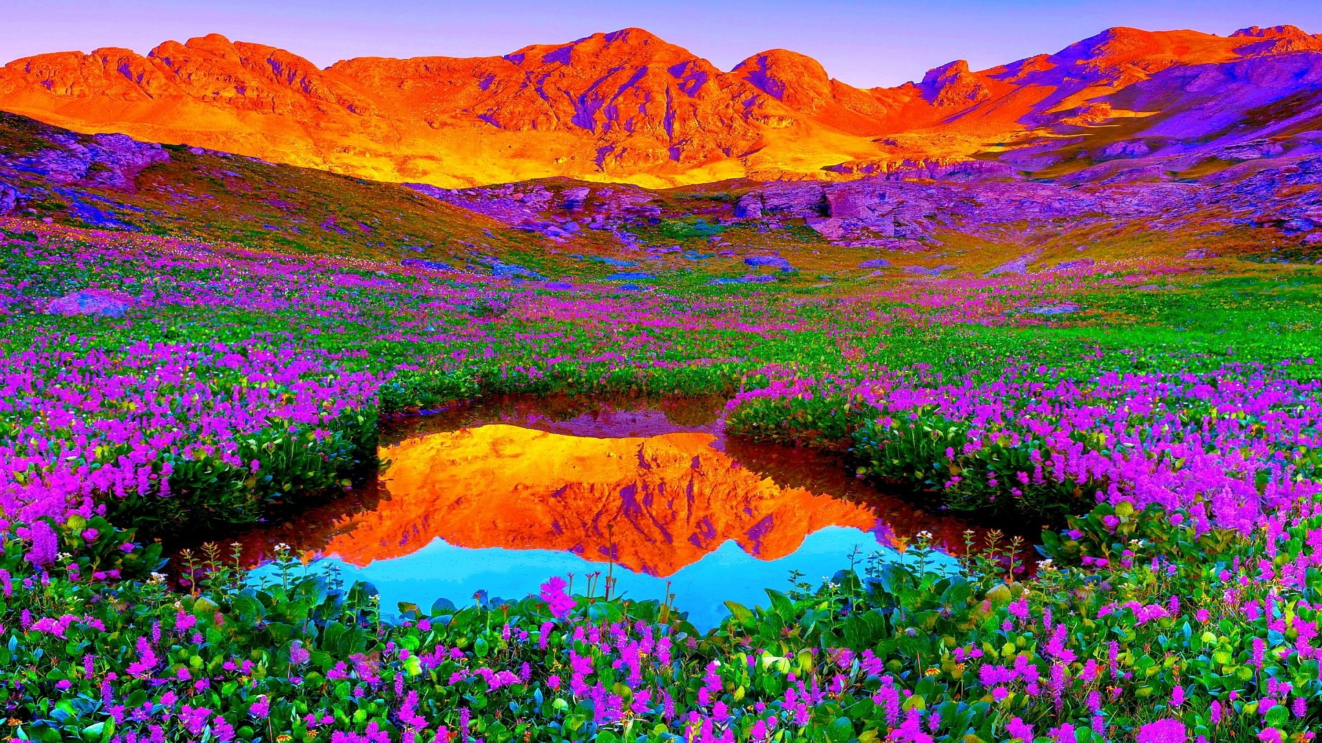 Beautiful Colors Of Nature HD Desktop Background