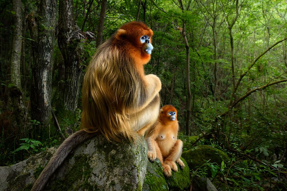 Winners of the 2018 Wildlife Photographer of the Year Competition
