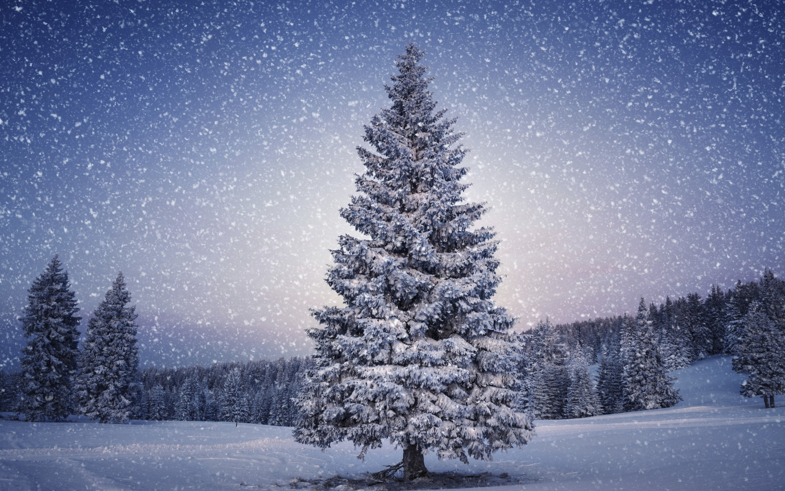 Christmas tree winter wallpapers
