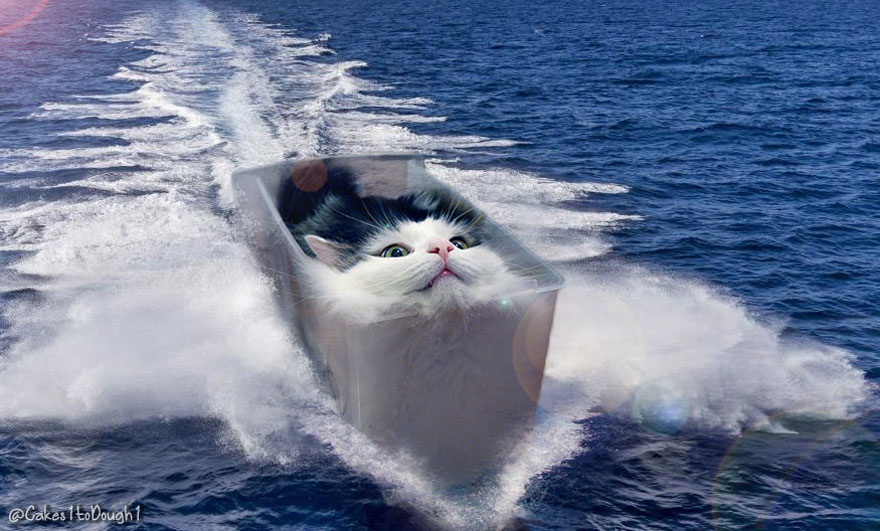 Funny Cat Photoshopped Images